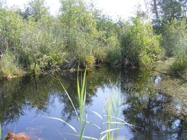 Marais de Lavours Dscf9222