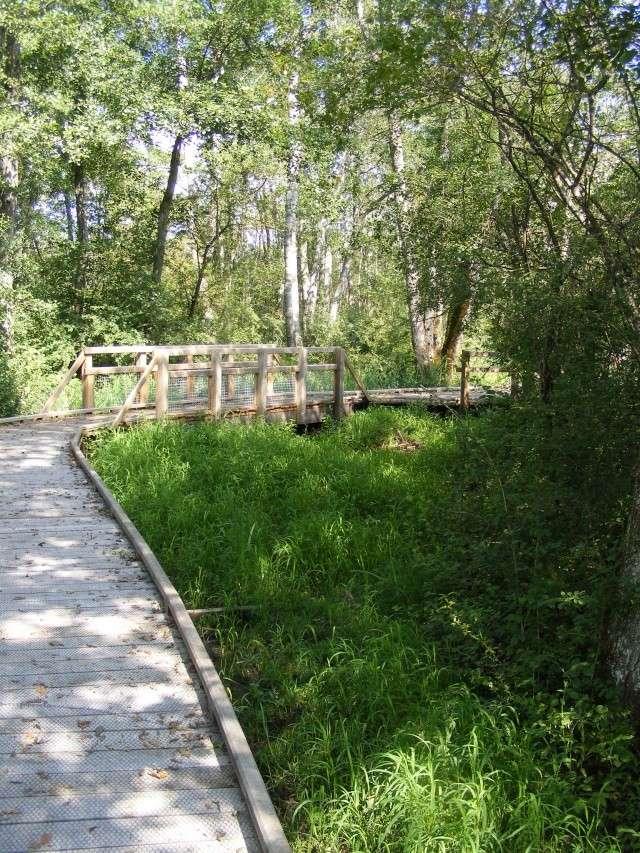 Marais de Lavours Dscf9227