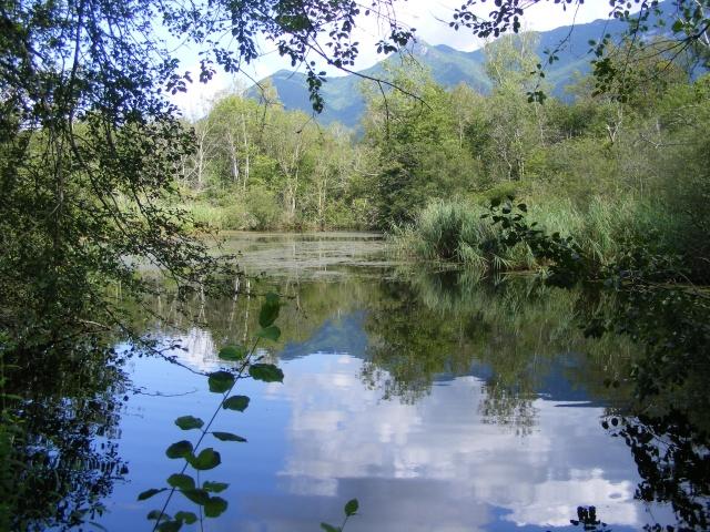 Marais de Lavours Dscf9240