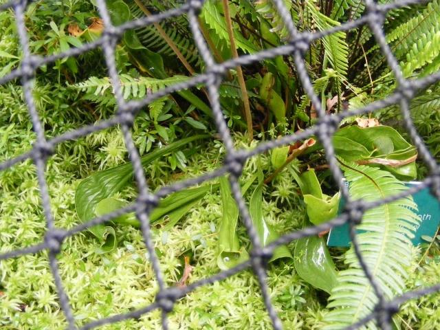 Jardin botanique Saverne (67) Dscf9514
