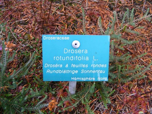 Jardin botanique Saverne (67) Dscf9516