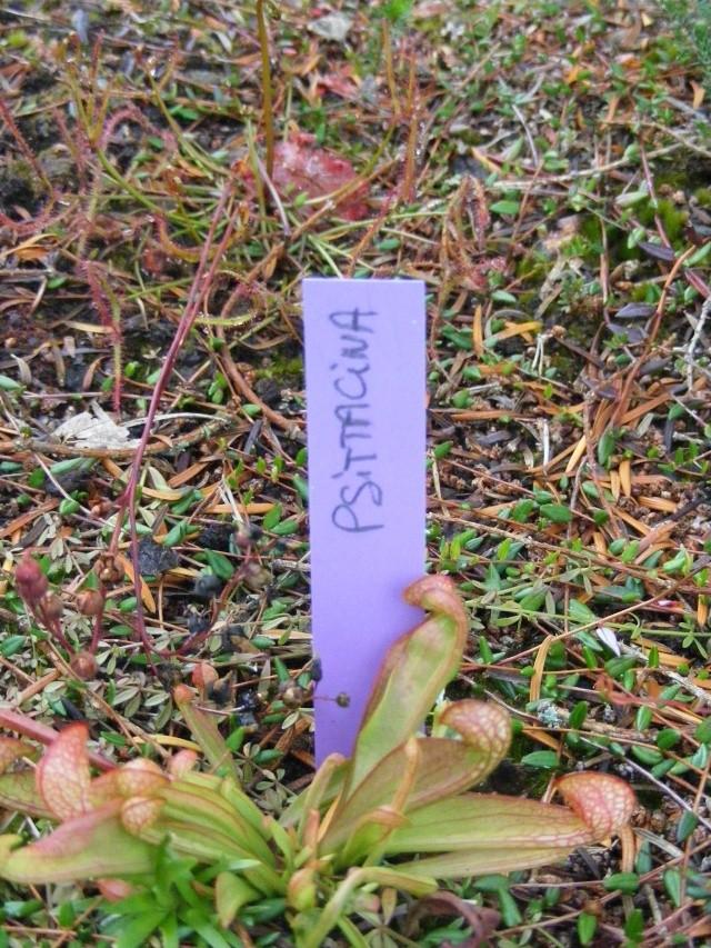 Jardin botanique Saverne (67) Dscf9517