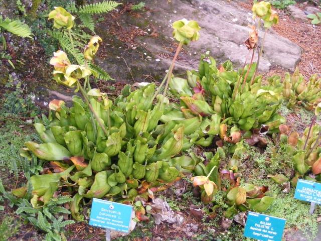 Jardin botanique Saverne (67) Dscf9522
