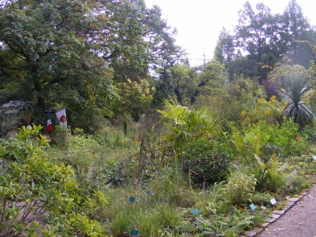 Jardin botanique Saverne (67) Dscf9532