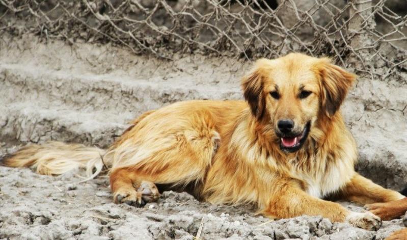 BOUNDASH II, né 2012, 25 kg (BELLA) Pris en charge Association Animals Rescue (Belgique) Bounda10