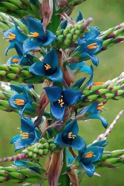 Dis-moi qui est la plus belle... Fleur_13