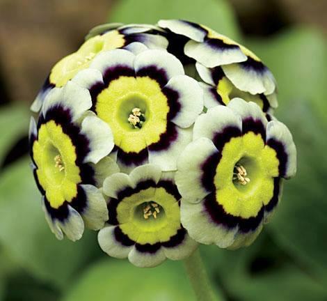 Dis-moi qui est la plus belle... Fleur_16