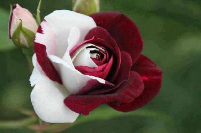 Dis-moi qui est la plus belle... Fleur_17