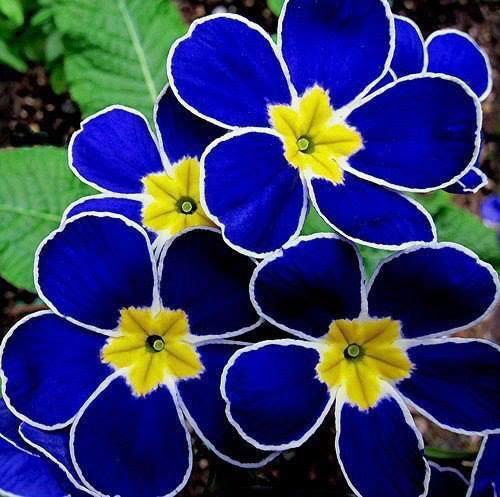 Dis-moi qui est la plus belle... Fleur_24
