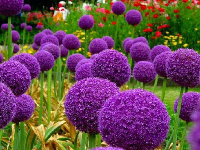 Dis-moi qui est la plus belle... Fleur_28