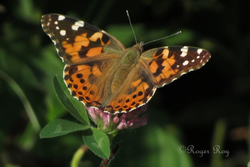 Papillons 20140915