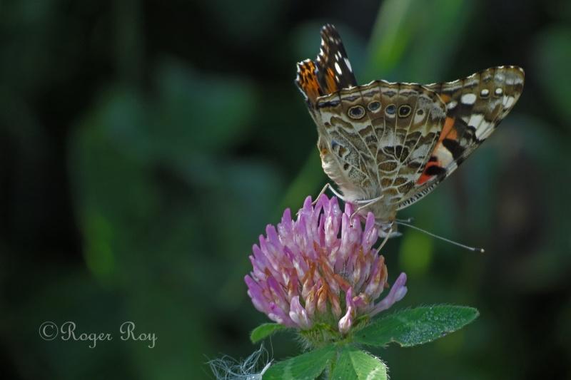 Papillons 20140916