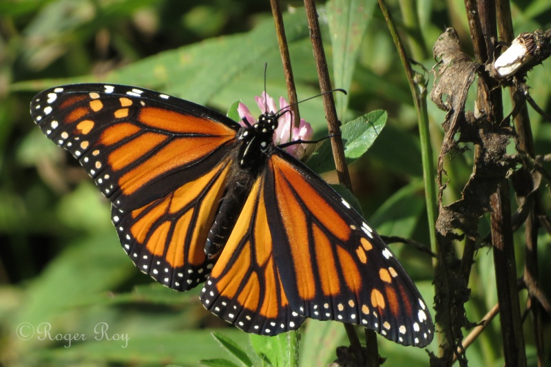 Papillons 20140917