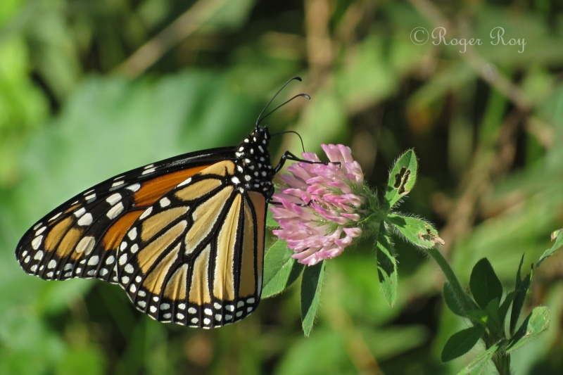 Papillons 20140918