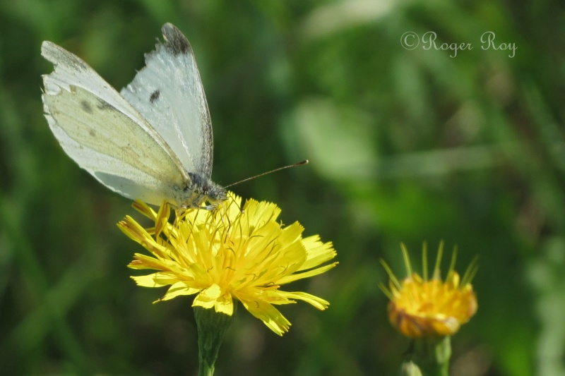 Papillons 20140919