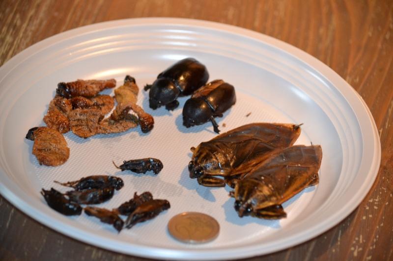 manger des insectes - Page 2 Dsc_0110