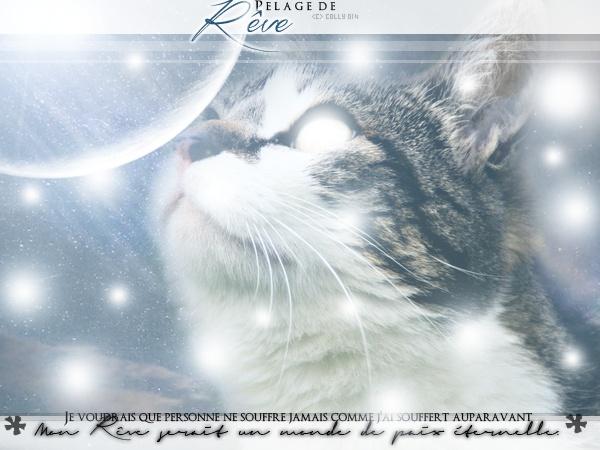 Rencontre au Clair de Lune [Étoile d'Écureuil et Étoile de Rêve] Pelage12
