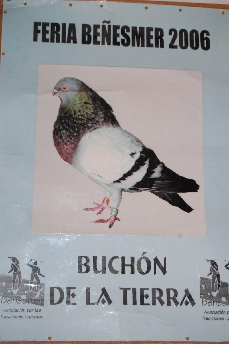 SONDEO SOBRE EL BUCHON DE TIERRA EN LA EXPOSICION Dsc_0215