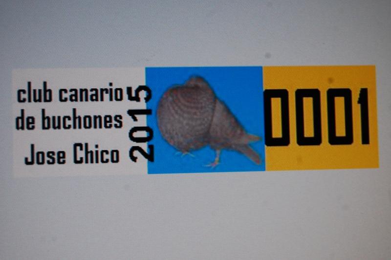 ANILLAS AÑO 2015 CLUB CANARIO DE BUCHONES JOSE CHICO Dsc_0310