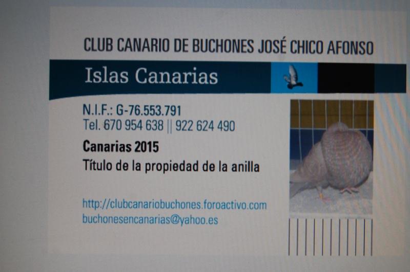 ANILLAS AÑO 2015 CLUB CANARIO DE BUCHONES JOSE CHICO Dsc_0311
