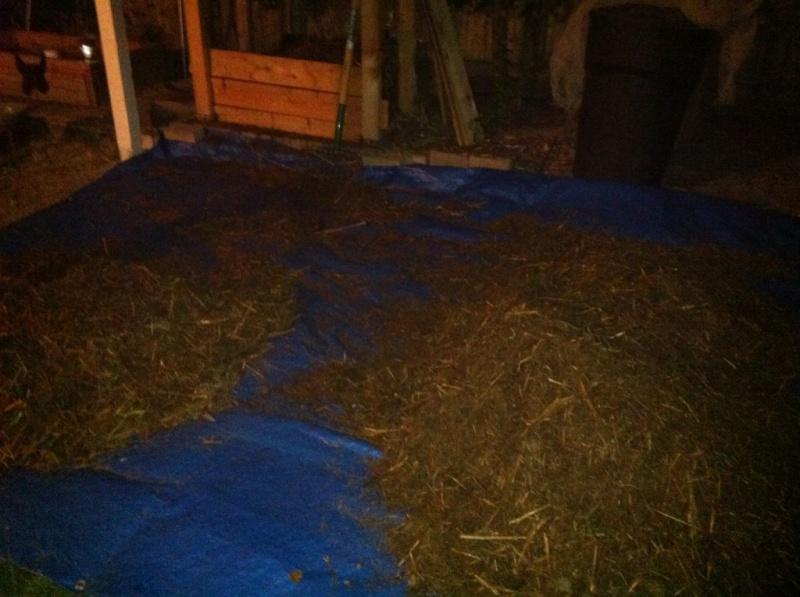 berkeley - Compost: Berkeley 18 day [hot] method  Compos17