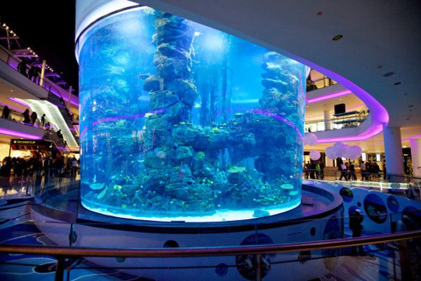 Aquarium du Morocco Mall : mort de plus de 2000 poissons  Arton310