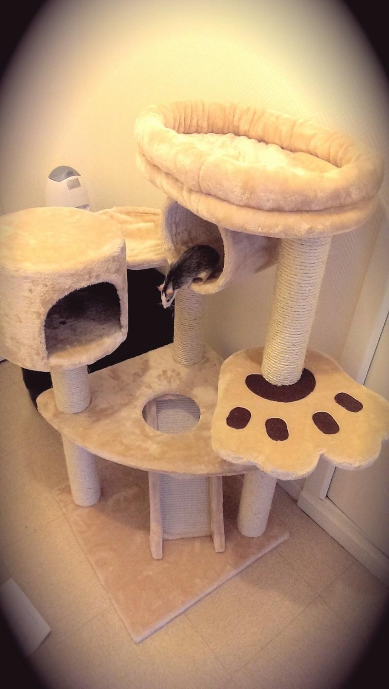 quel arbre a chat choisir Imag0411