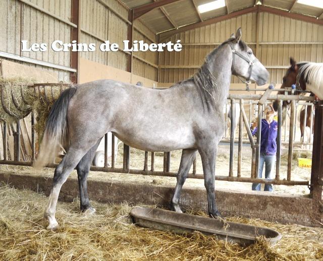 (Dpt 63)  CALYPSO, ONC, Adoptée par le centre equestre de pluvigner (Août 2014) - Page 2 210