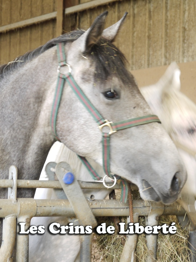 (Dpt 63)  CALYPSO, ONC, Adoptée par le centre equestre de pluvigner (Août 2014) - Page 2 310