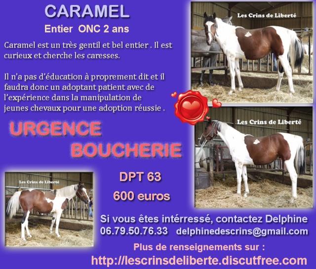 Dpt 63 - CARAMEL ONC pie 2 ans - Delphine - Adopté par Sylv44 (Sept 2014) Fiche_12