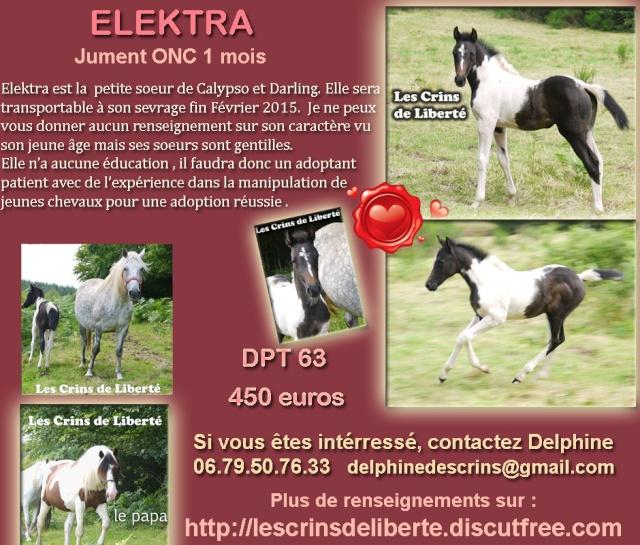 (Dpt 63) ELEKTRA,  ONC,  adoptée par oce2305 (Sept 2014) - Page 5 Fiche_15