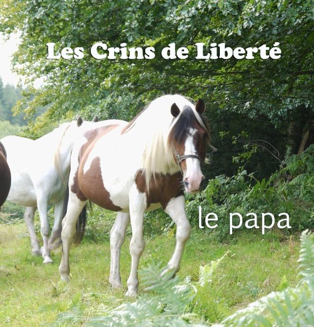 Dpt 63 - CARAMEL ONC pie 2 ans - Delphine - Adopté par Sylv44 (Sept 2014) Papa13