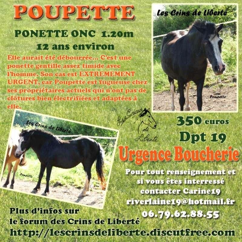 (Dept19) POUPETTE, ponette, sauvée par les Ecuries de la Guerinière (Mars 2015) Poupet10
