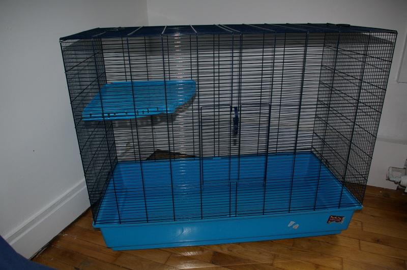 Freddy 3 à vendre vite prix baissé 30€ Cage1010