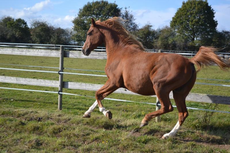 Heldon, PSAR ataxique, un cheval que l'on vouvoie Dsc_0516
