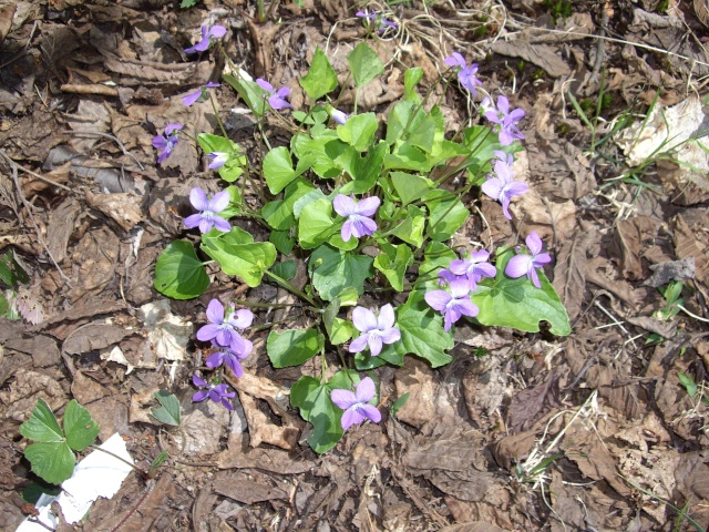 petite flore du Québec Imgp9317