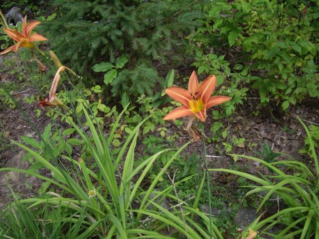 petite flore du Québec Imgp9912