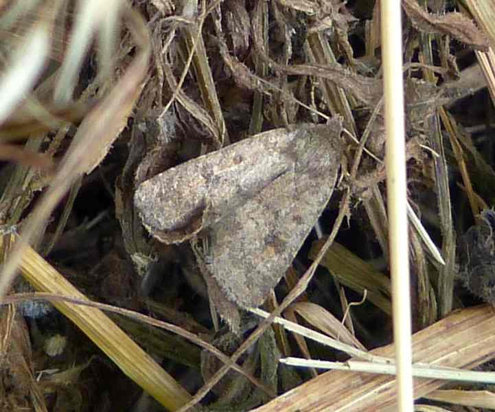 Identification d'un nocturne P1080812