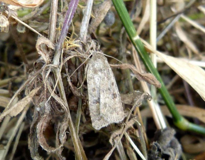 Identification d'un nocturne P1080813