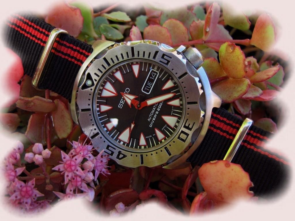 La montre de vendredi 17 octobre Rtimg_45