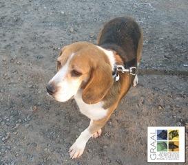 [dec. 2013] 3 chiens adultes - Vendée Acaras10