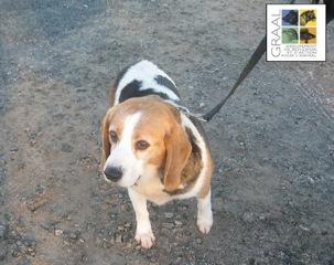 [dec. 2013] 3 chiens adultes - Vendée Acoios10