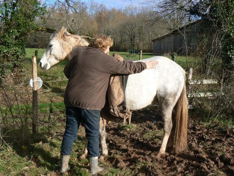 ALONA dite LOUNA - ONC Poney née en 2010 - adoptée en novembre 2013 par Brigitte - Page 3 P1290425