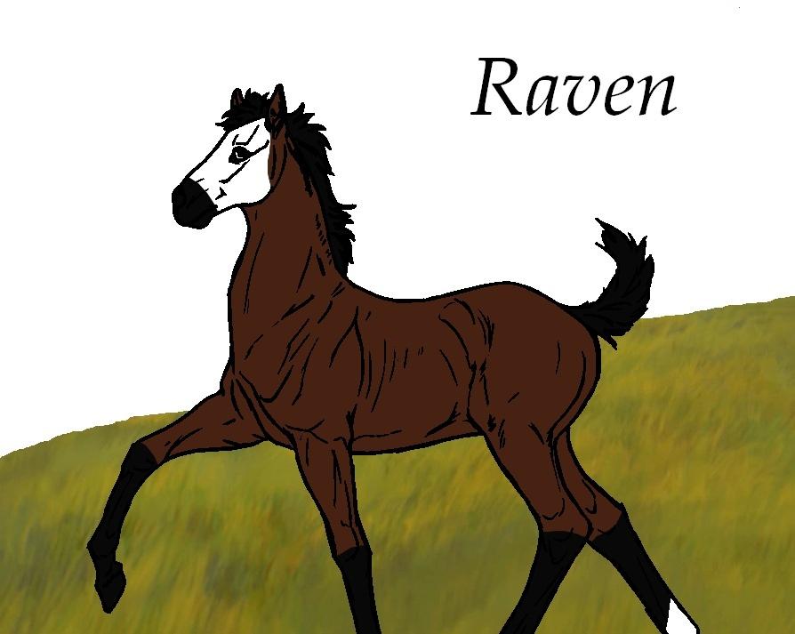 ₪ Troupeau De Quinn ₪ Raven11