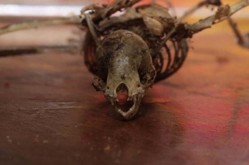 Un petit squelette _mg_8011