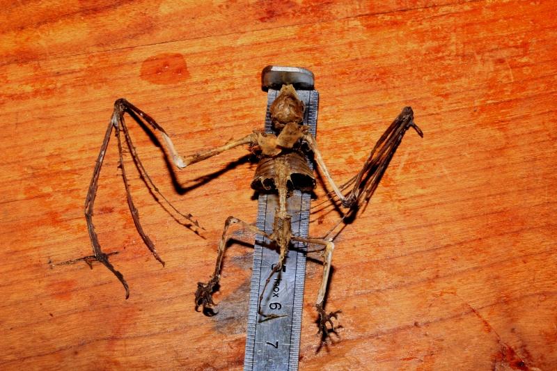 Un petit squelette _mg_8012