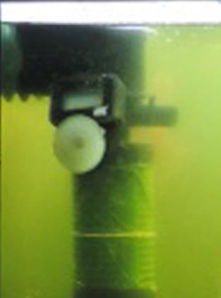 Problème je pense micro algue  Filtre10