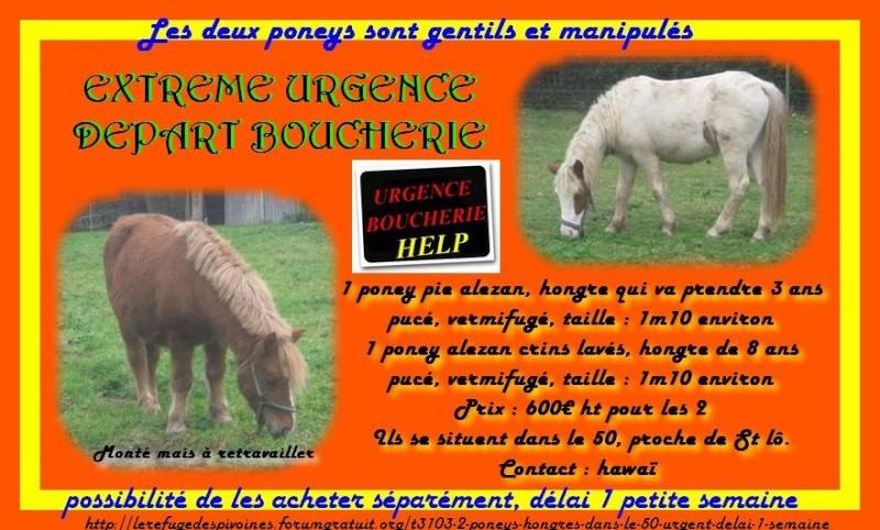 2 poneys près de St-Lô en sursis ULTRA URGENT Urgenc11