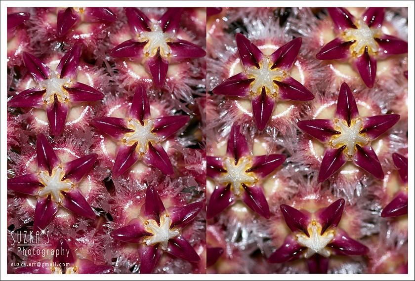 Blüten 2014 - Seite 24 Pk3a4815