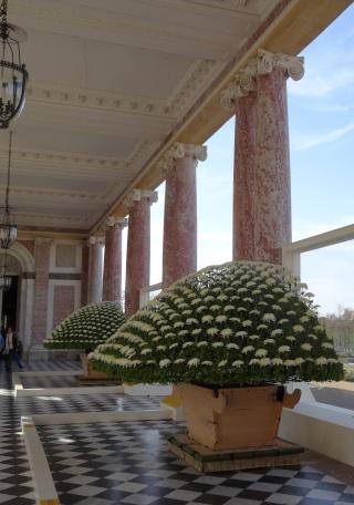 Versailles expose des chrysanthèmes japonais en 2014 Dsc01411
